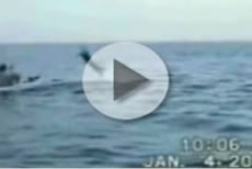 Kayaker Catches Swordfish Video