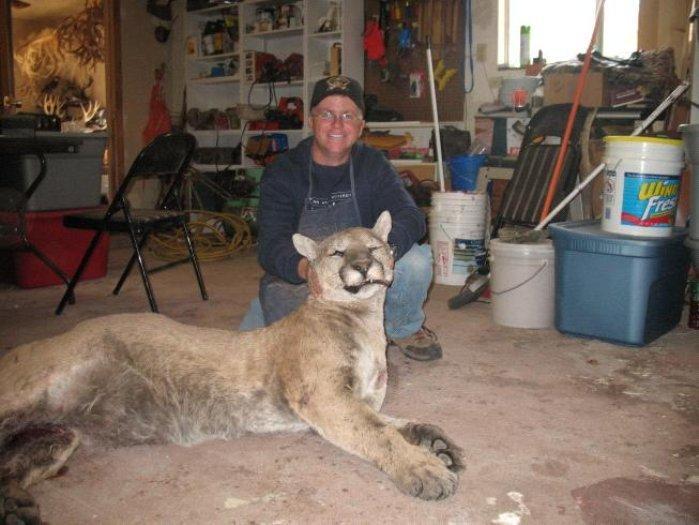 260 Pound Mountain Lion Near Swenson, Texas