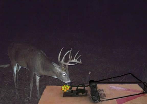 New Deer Feeder Invention